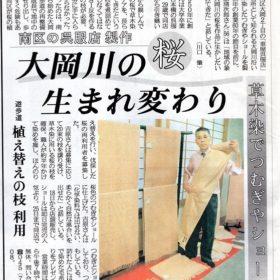 大岡川の桜の新聞記事
