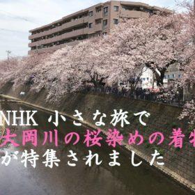 NHK小さな旅で桜染めの着物が紹介されました